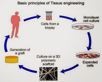 Scaffolds for Tissue Engineering | Characteristics and Basic ...