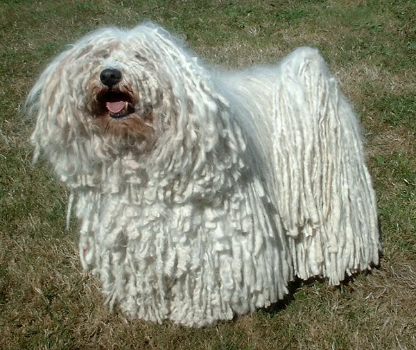 Mop Dog Real Name
