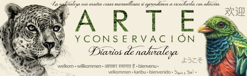 Arte y Conservación Journal