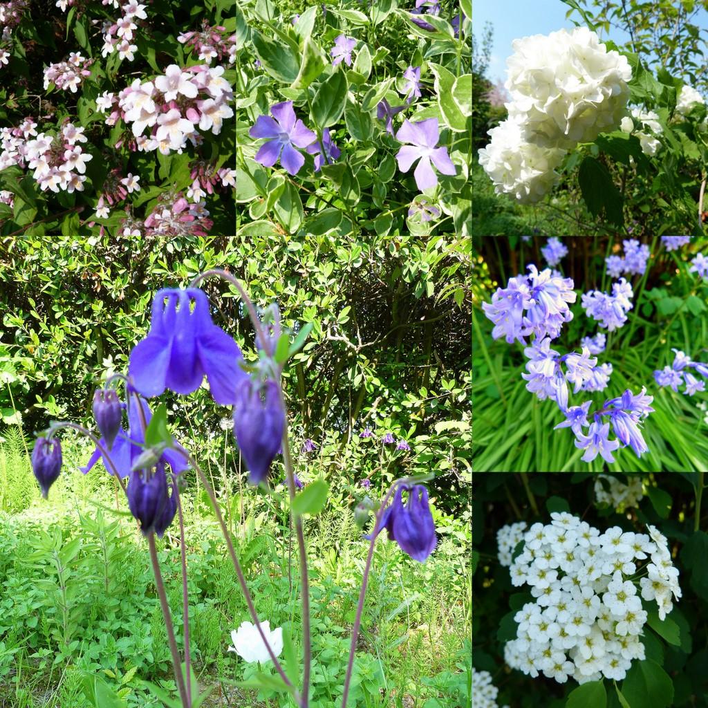 Petit patch smaranda jardin giffois for Fleurs thes au jardin