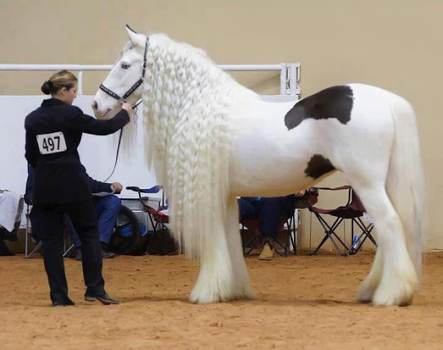 Worlds Most Beautiful Horse
