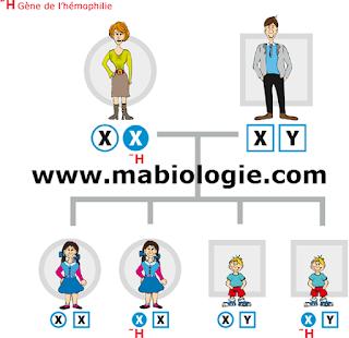 la génétique mendélienne
