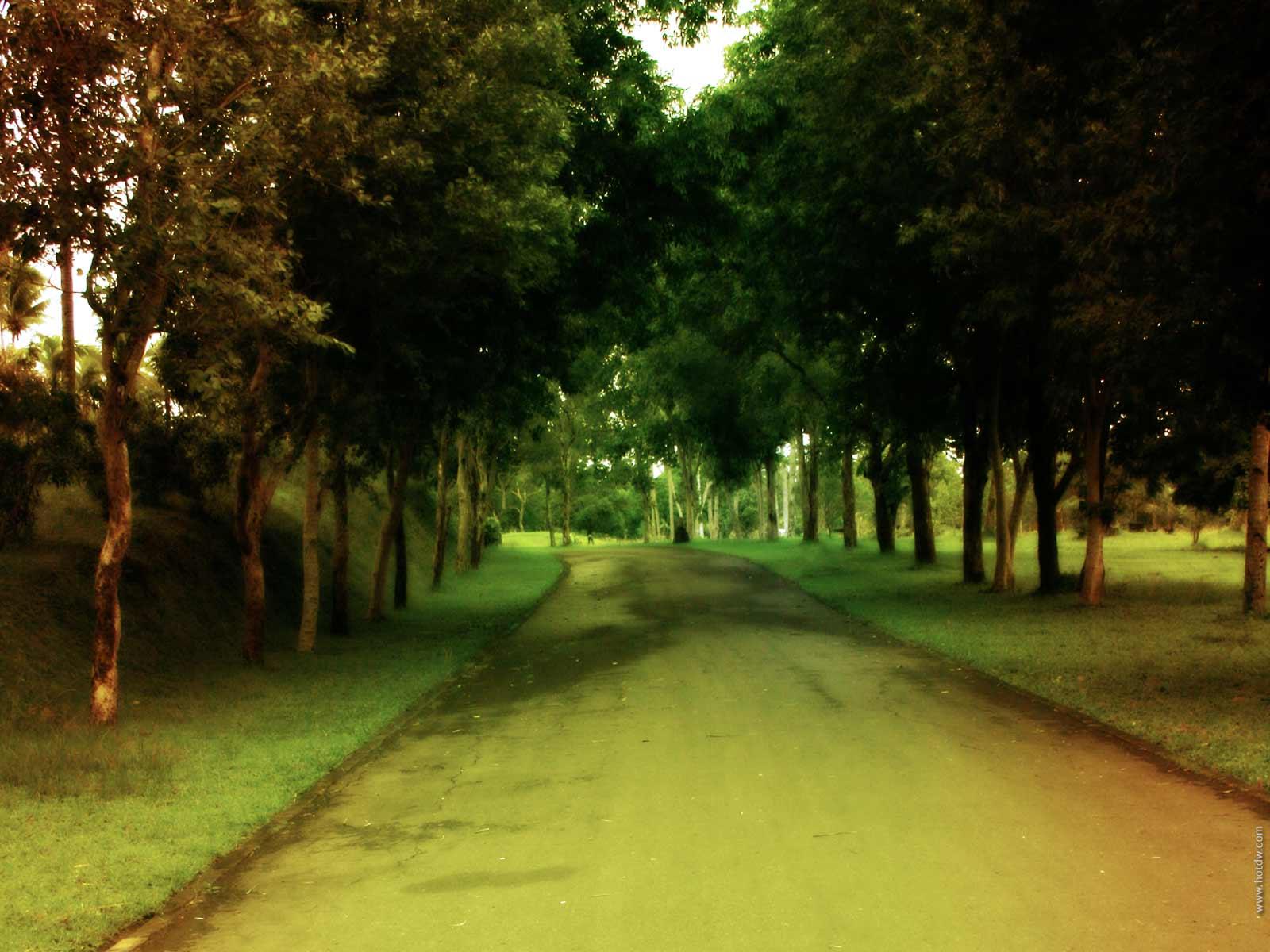 http://4.bp.blogspot.com/-RqZ0Zx3bwdU/Tn-ehnitbRI/AAAAAAAAARM/jpy00_ozR0s/s1600/green+color+wallpaper+2.jpg