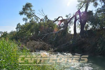 Río Tajo Aranjuez Pesca