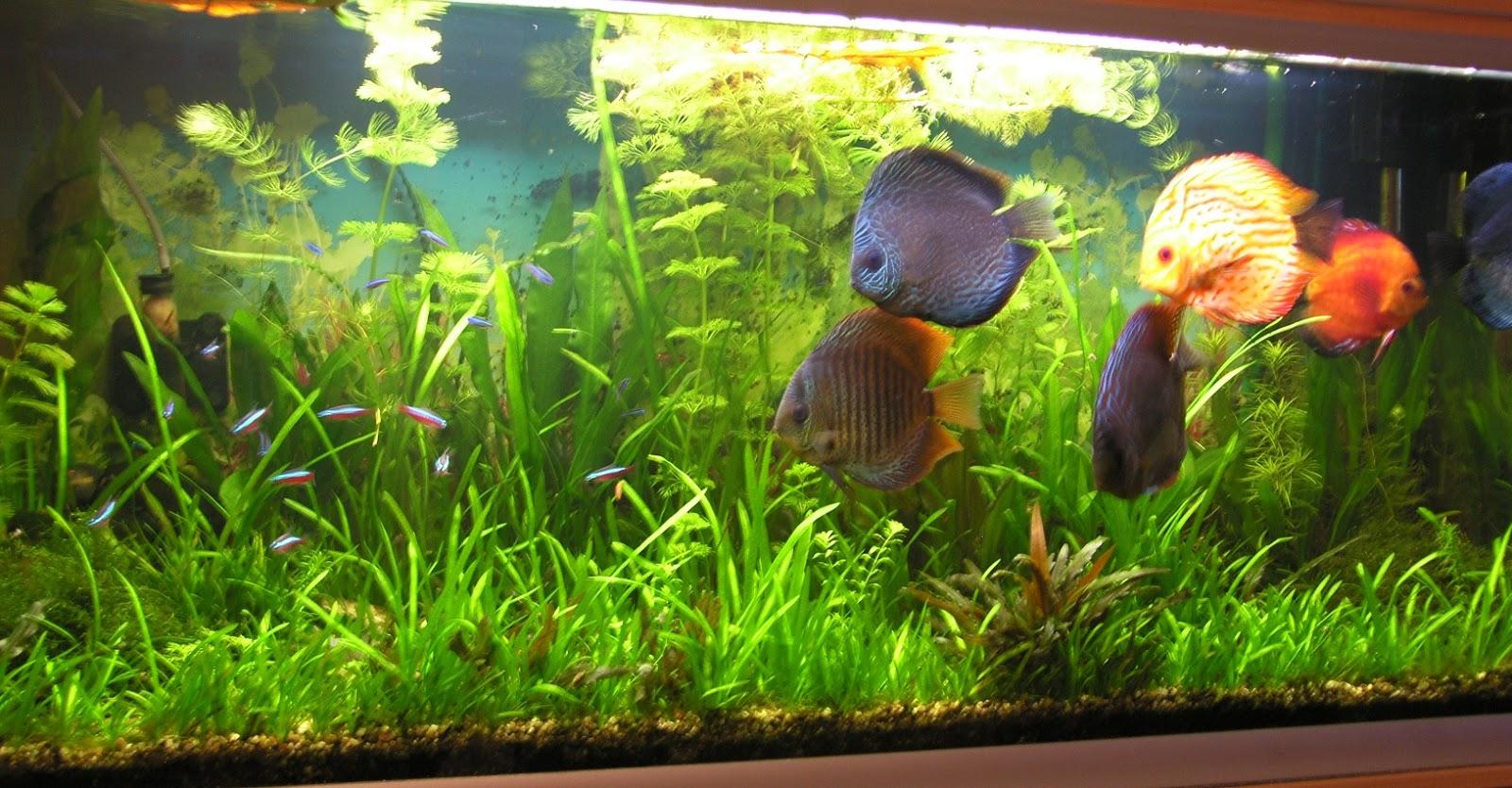 Produits anti algues engrais pour aquarium conditionneur for Aquarium bac