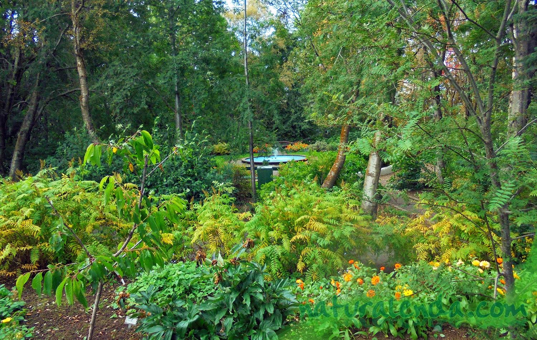 jardin botanico en islandia