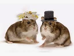 Tanya Jawab Seputar Hamster