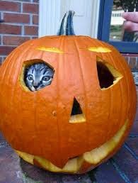 Funny halloween animals2-5