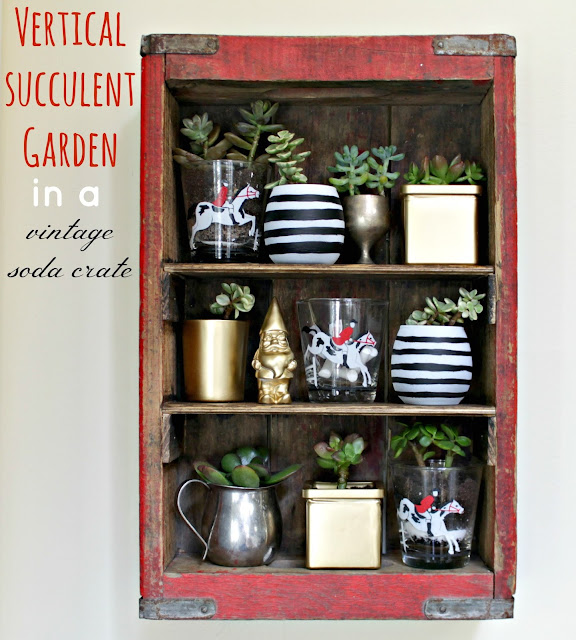 succulent garden in a soda crate
