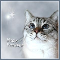 Maxx  RIP