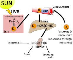 Vitamin D and Multiple Sclerosis an Update