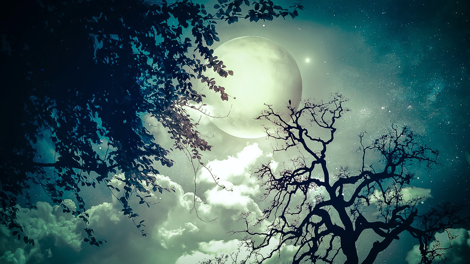 sky-with-moon-at-night-with-trees-image.jpg