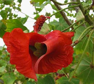 Bunga Langka di Dunia