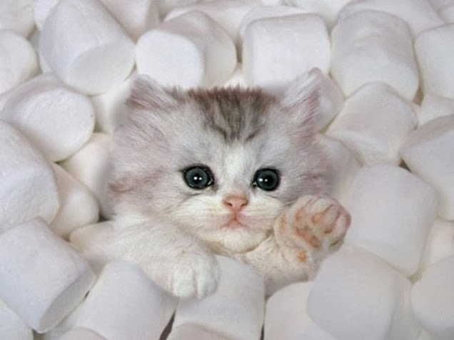 Marshmallows and Kittens poem