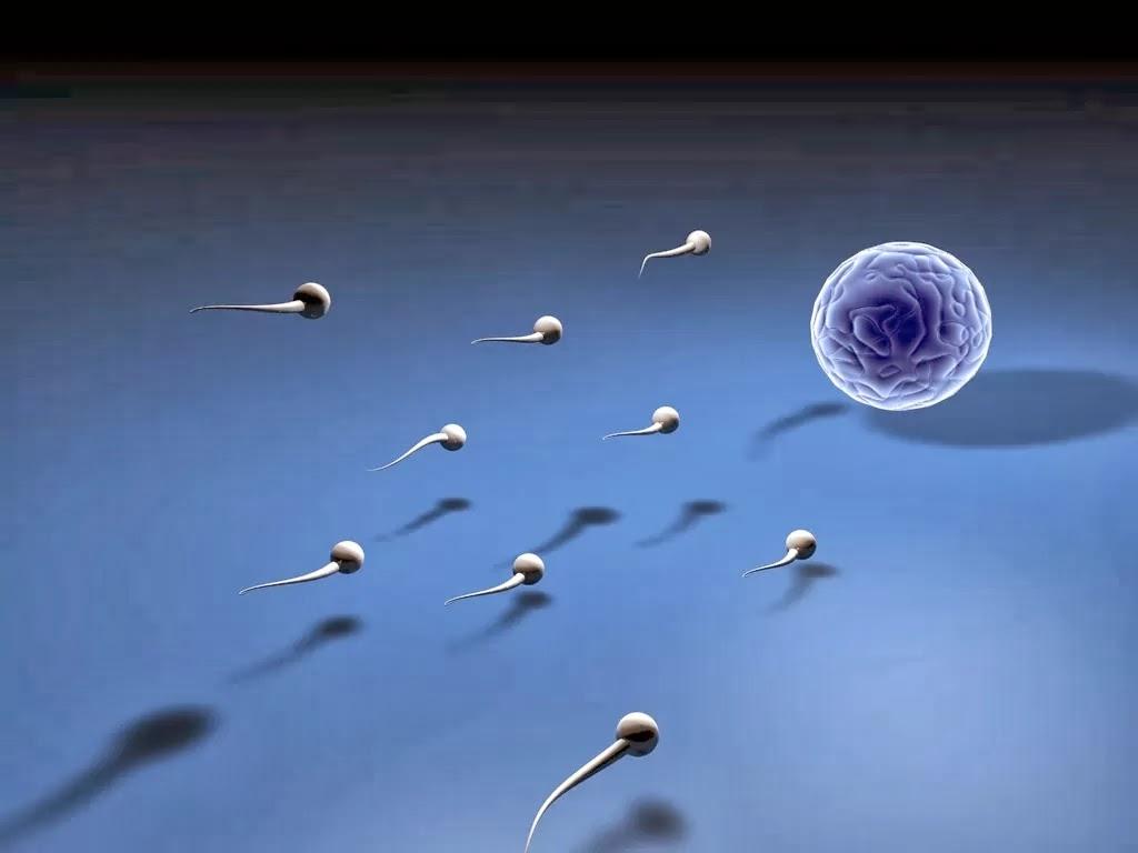 Tips Meningkatkan Kesehatan Sperma Pria