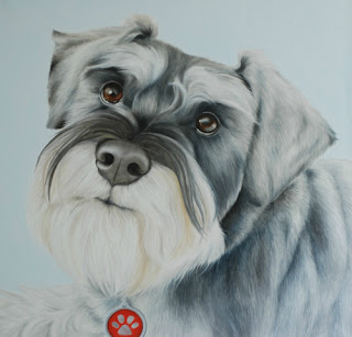 Pet portrait Schnauzer oil on canvas