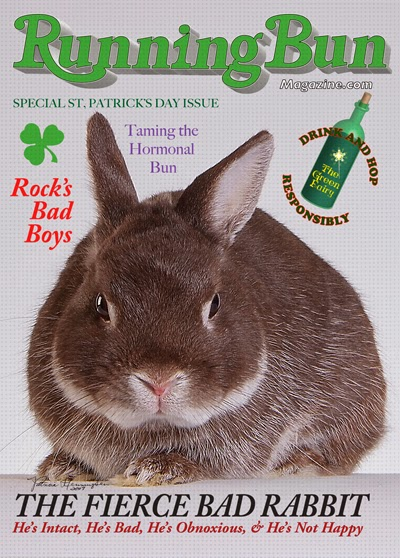 http://www.zazzle.com/fierce_bad_rabbit_running_bun_cover_full_size_poster-228335920098990786?rf=238368801324753632