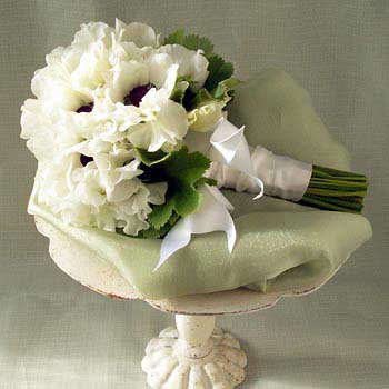 Hydrangea Flowers on Wedding Flowers  White Wedding Flowers