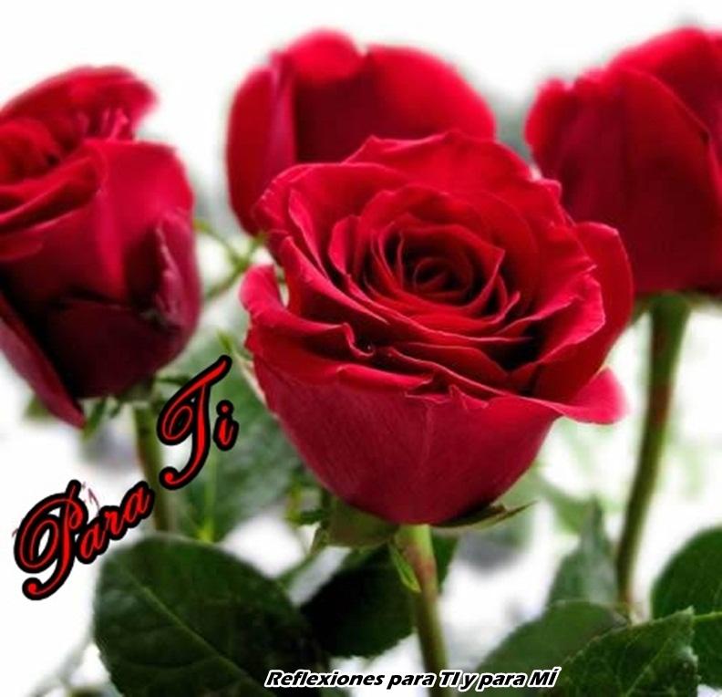 Reflexiones para ti y para m junio 2012 - Fotos de flores bonitas ...
