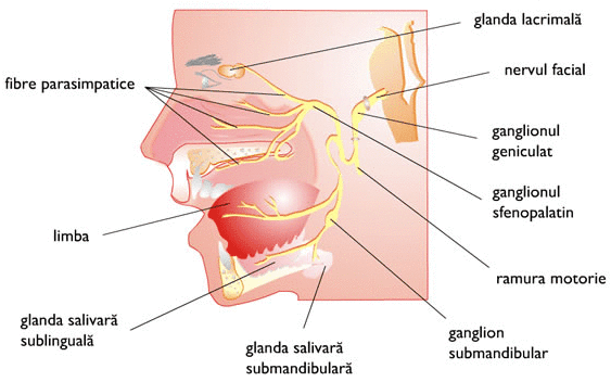 Cauzele, afectiunile glandelor salivare si glandele lacrimare