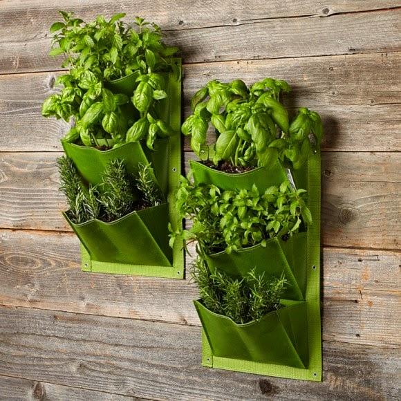 Le difficolt vanno superate il giardino verticale in casa - Giardino verticale in casa ...