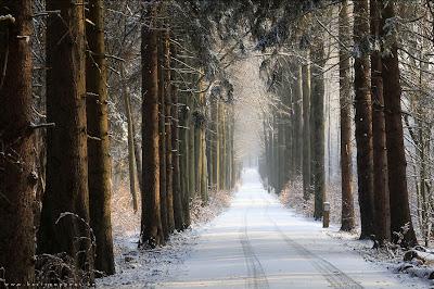 Bosque en el Invierno - Winter Forest