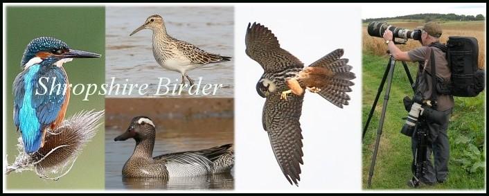 Shropshire Birder