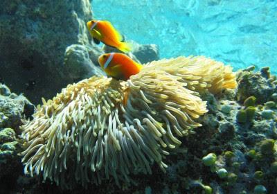 photograph Maldives