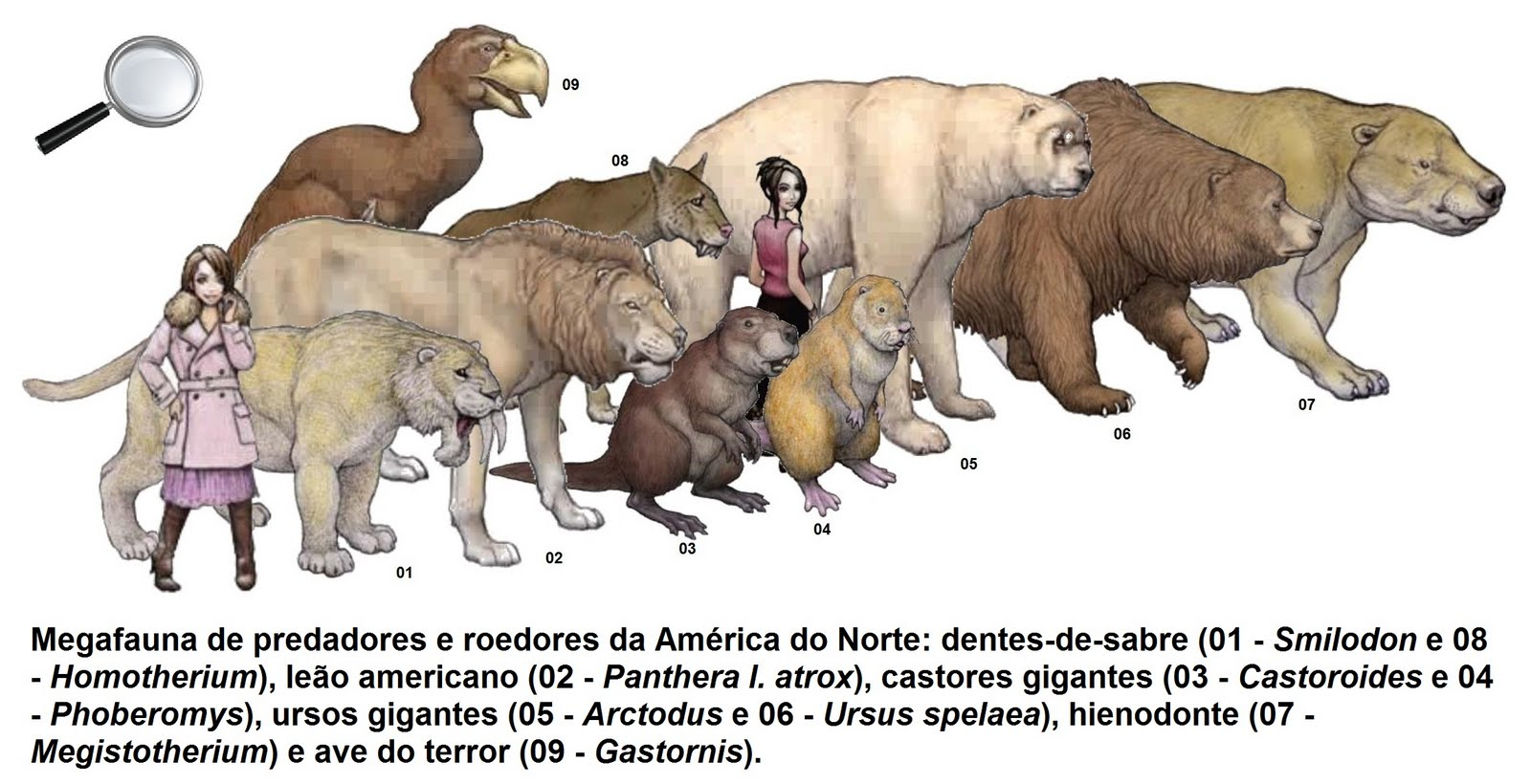 the possible causes of the australian megafauna extinctions at the end of the pleistocene A die-off of large mammals worldwide at the end of the pleistocene epoch in australia and clues about the possible cause of the extinction.