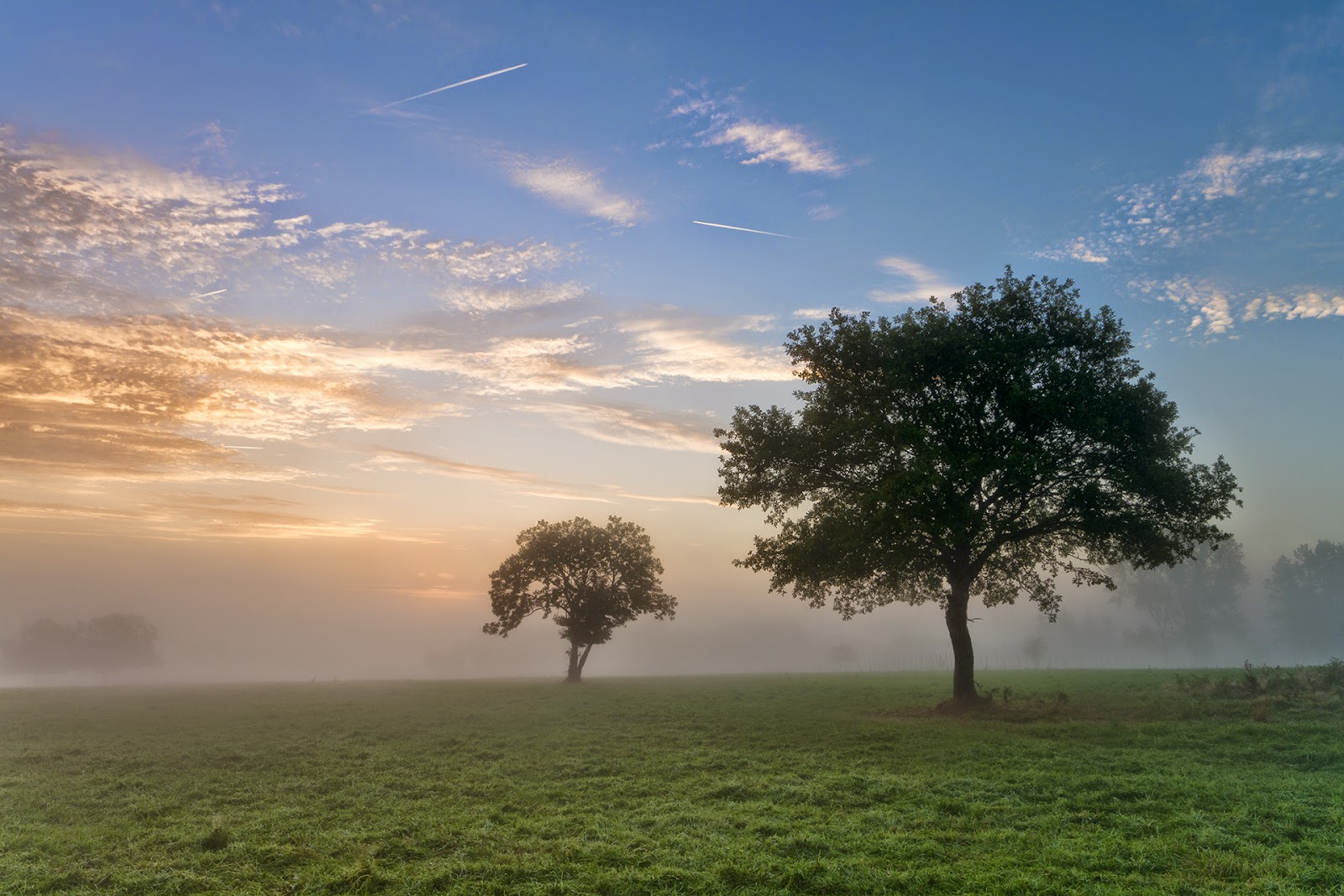 Misty Trees By James Whitesmith | Two Trees In A Field Surrounded By Mist