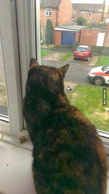 Long Distance Relationships are Hard Even for Cats!