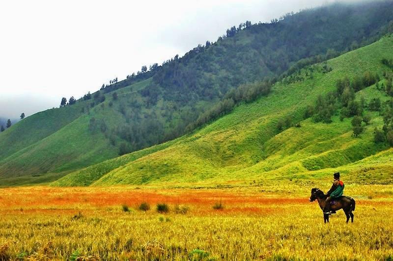 Bukit Savana Telletubies Bromo - Probolinggo Jawa Timur