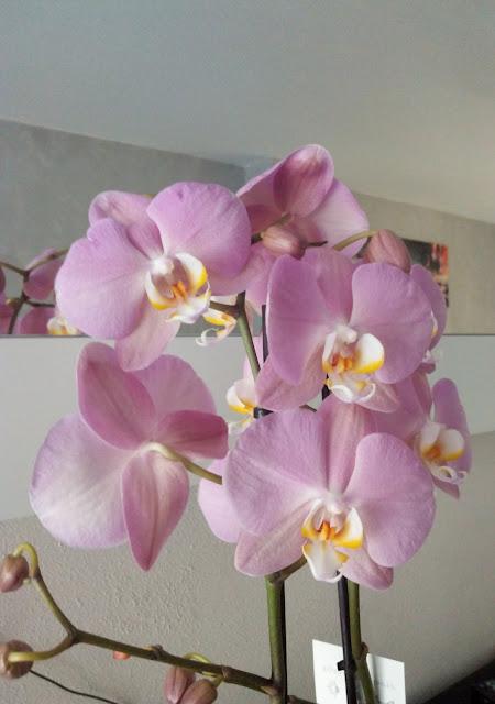 fleur, orchidée, bullelodie
