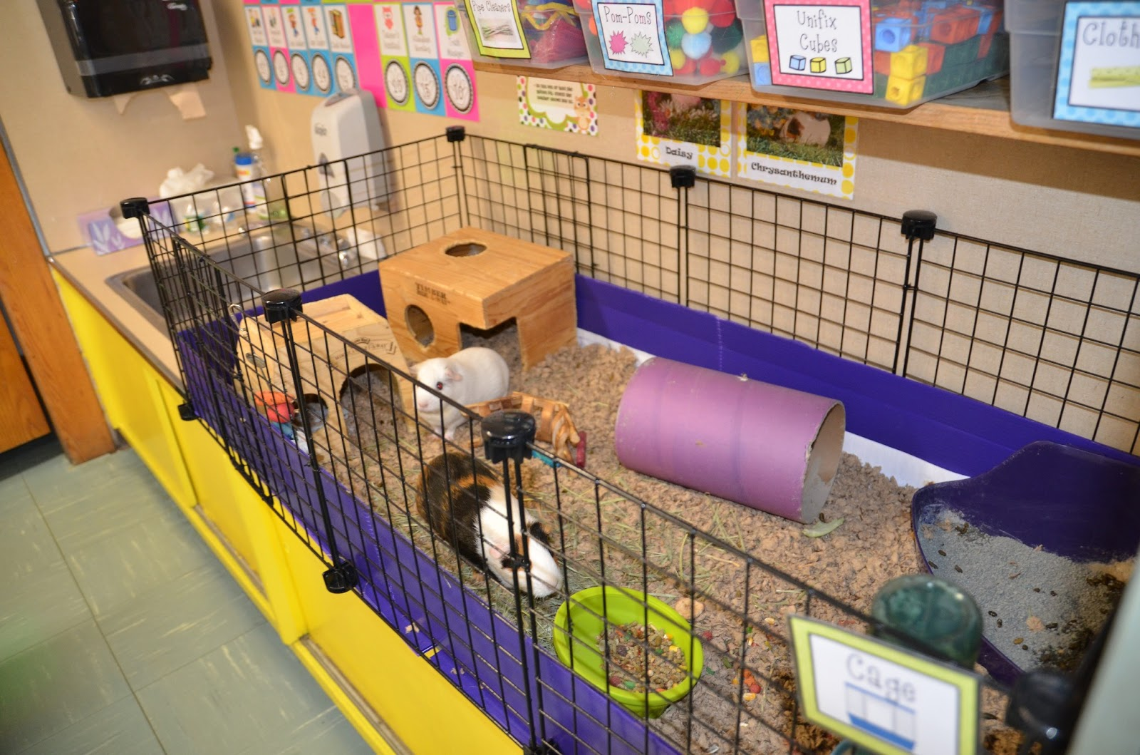 critters in the classroom c c guinea pig cages