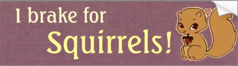 http://www.zazzle.com/i_brake_for_squirrels_bumper_sticker-128402212452861754?rf=238854480056260876