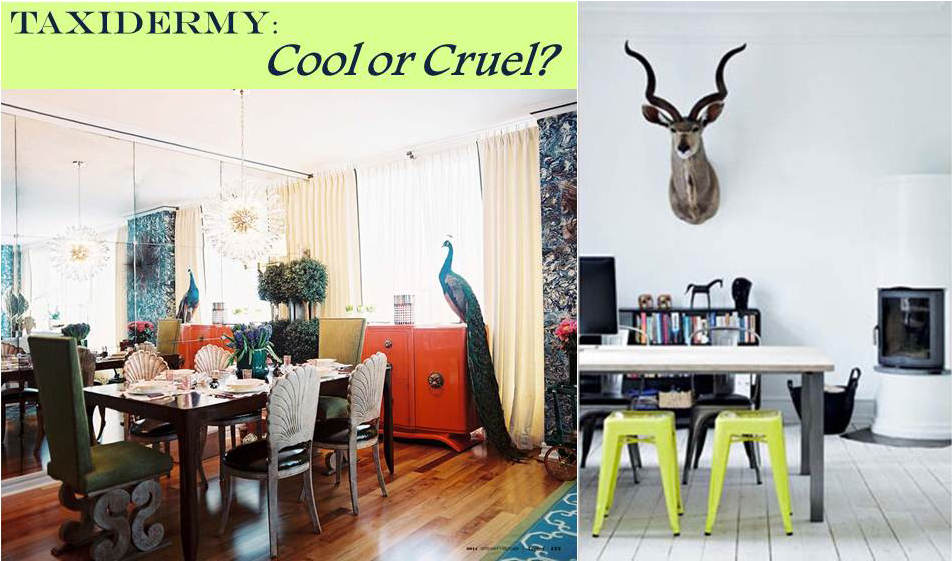 A Bit of Sass: Taxidermy in Interior Design: Cool or Cruel?