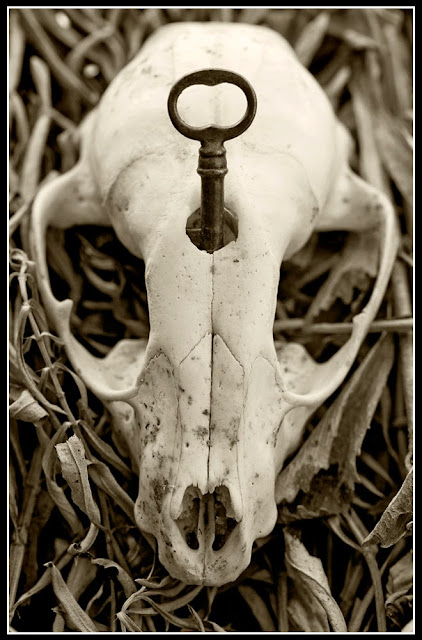 Dead; Death; Bones; Future Fossils; Decay; Skeleton; Skull; Key