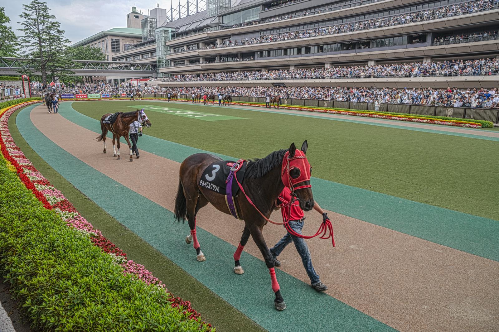 東京競馬場、パドックのHDR写真