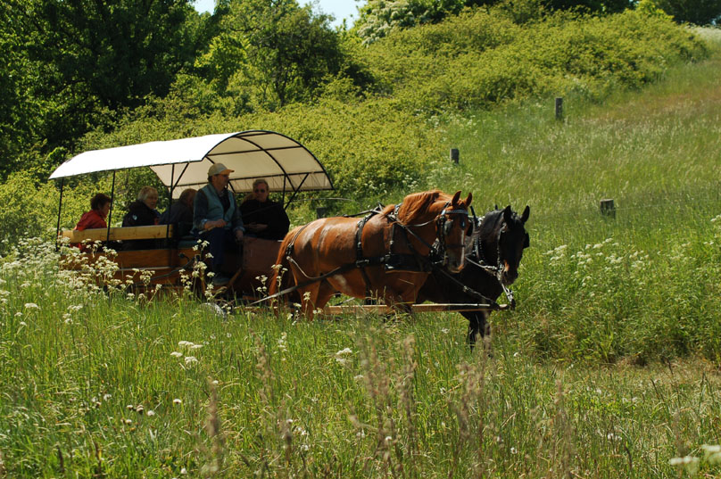 Horse carriage Mols Bjerge