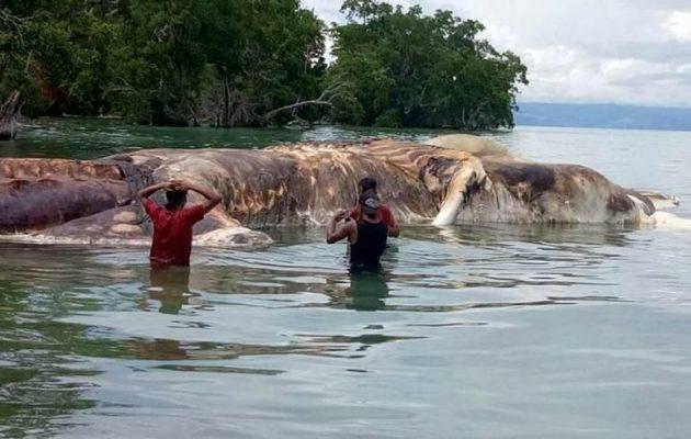 «Θαλάσσιο τέρας» ξεβράστηκε στις ακτές της Ινδονησίας (βίντεο)