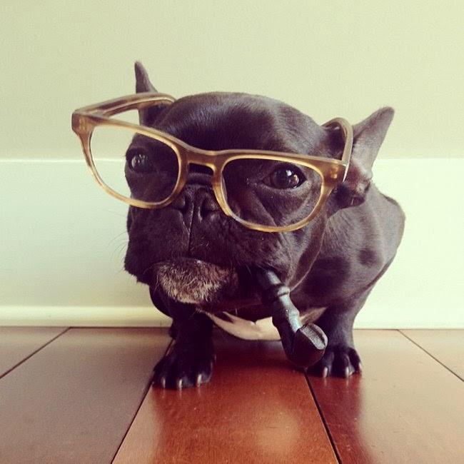 Funny French Bulldog Interesting New
