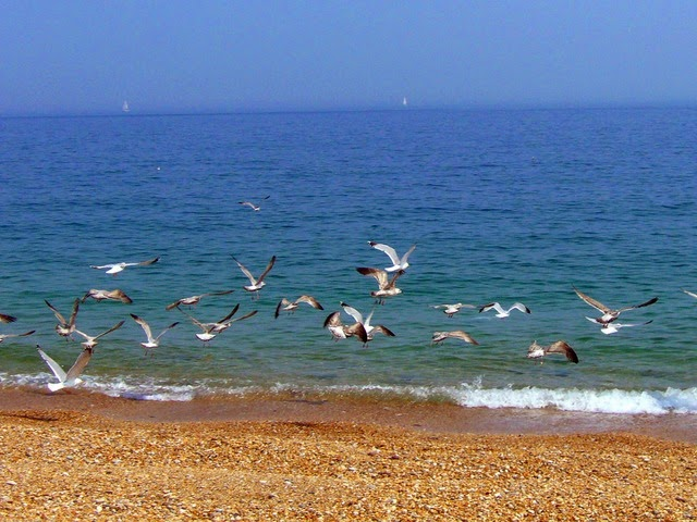 playa aves arena