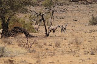 Elefanten und schwere Stunden im Schilf