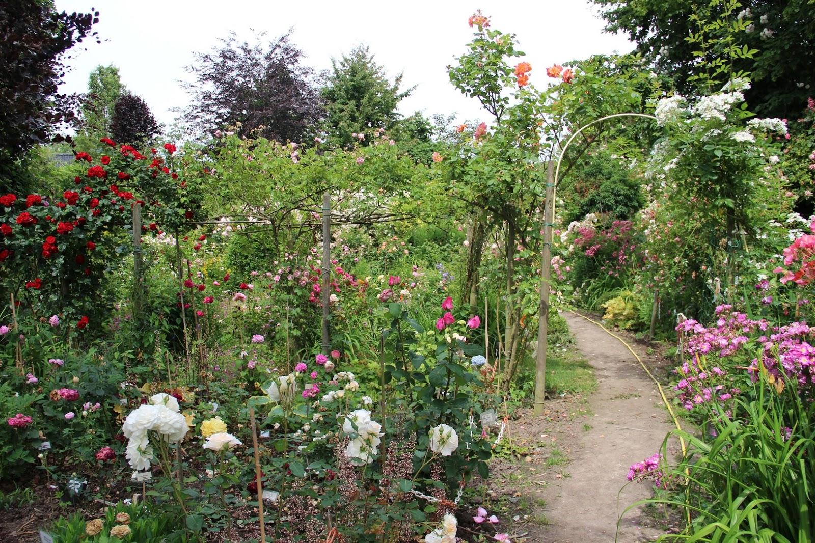 Derri re les murs de mon jardin juin 2015 - Derriere les murs de mon jardin ...