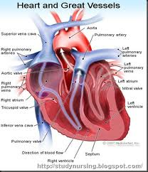 Damage to the electrical system of the heart