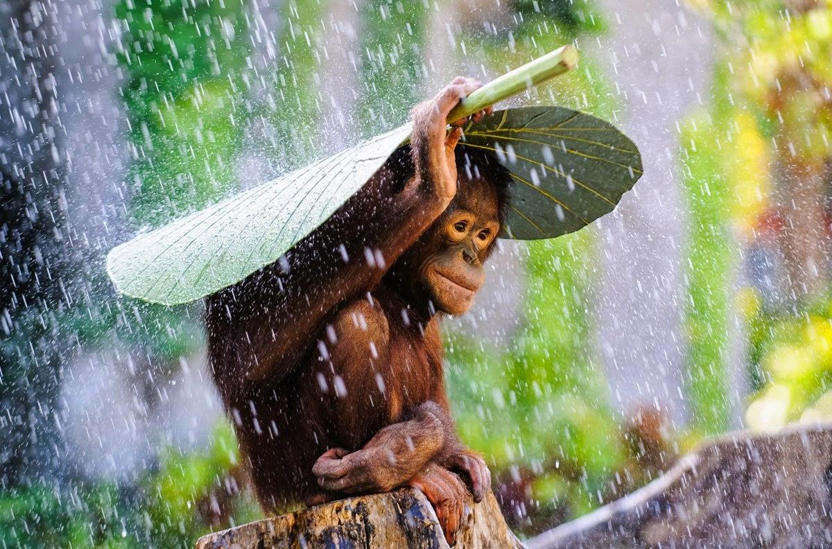 التصوير الفوتوغرافي في  المطر