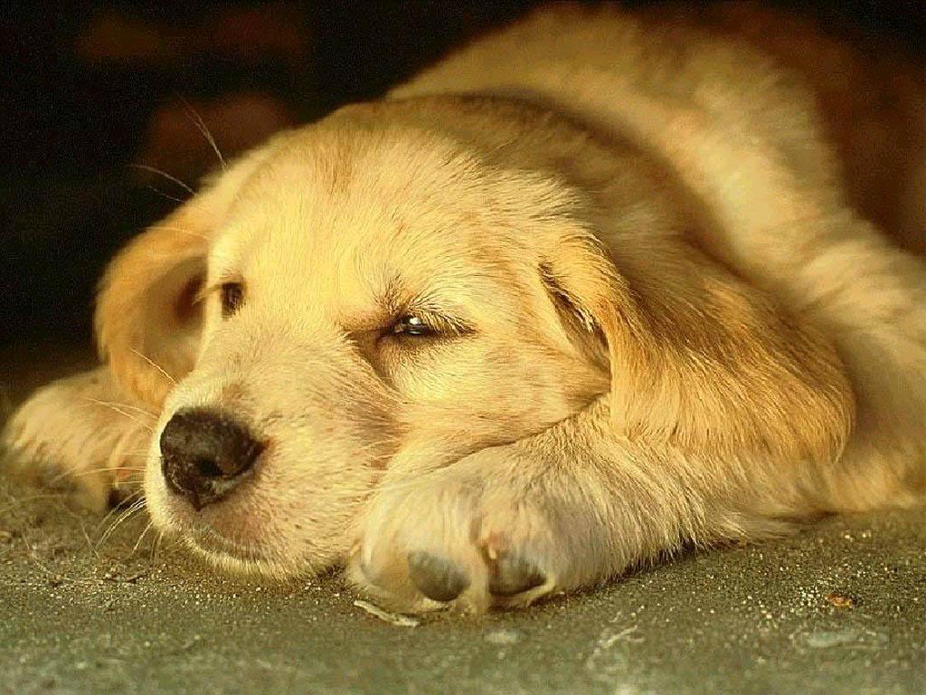 wyatttwirp: Wallpaper Pet Dogs