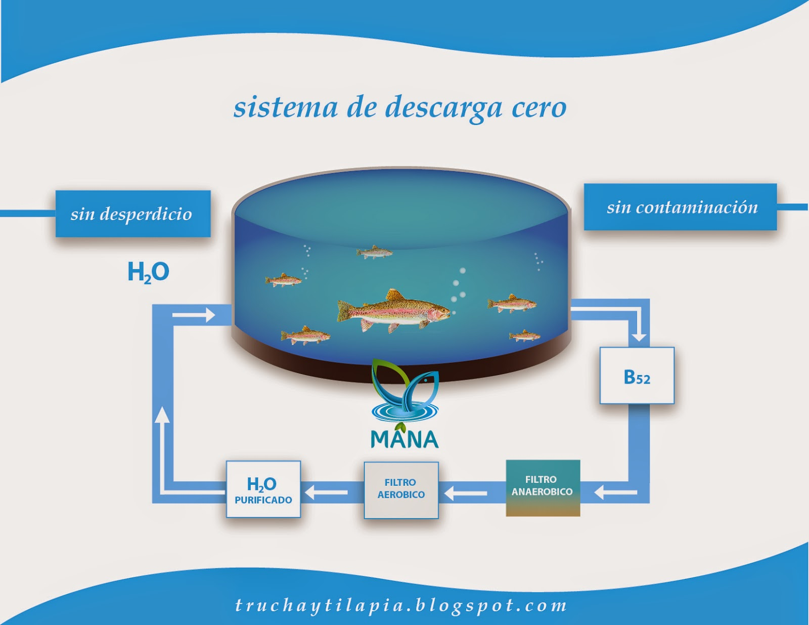 Asesor a trucha y tilapia especificaciones for Peces pequenos para estanques de agua fria