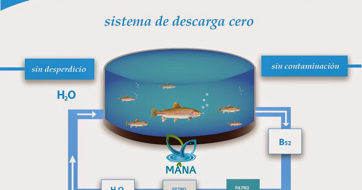 Asesor a trucha y tilapia especificaciones for Proyecto de crianza de truchas pdf