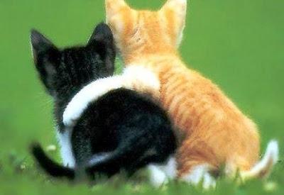 JASA SEDOT WC BUDURAN  SIDOARJO TLP 031-78273589 - Kucing Lucu